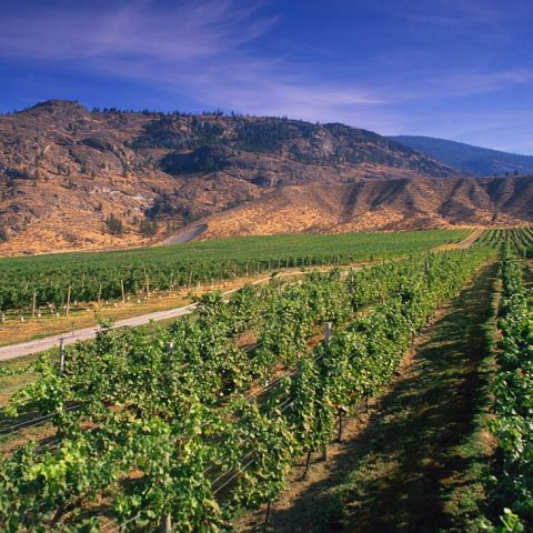 Osoyoos Nk'Mip Winery Filming Location